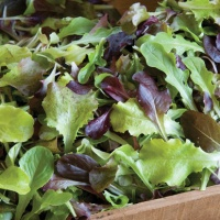Mix Lettuce Leaves Bulk Pack (Approx 450 gm)