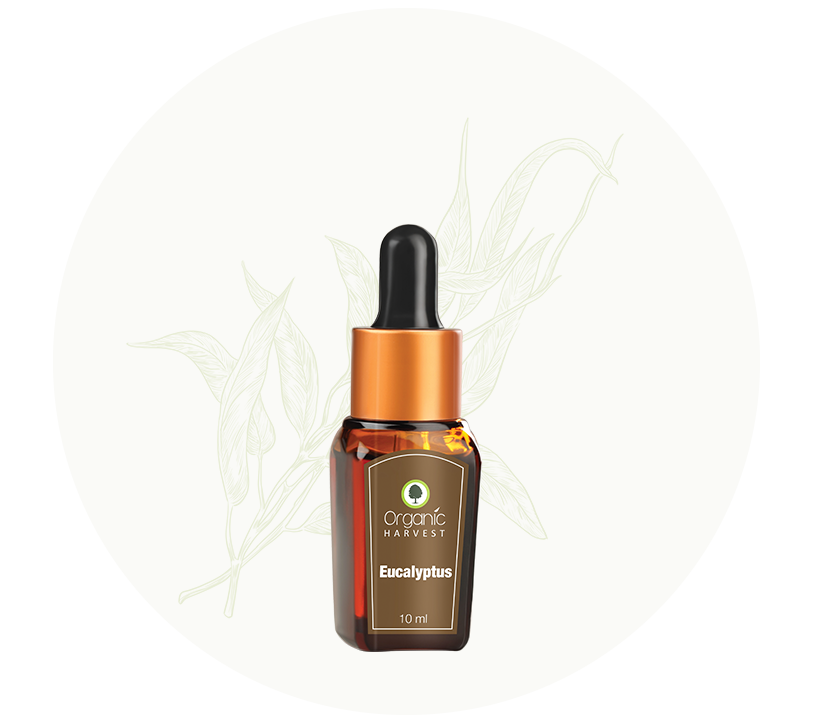 Organic Harvest Eucalyptus Essential Oil 10 ml